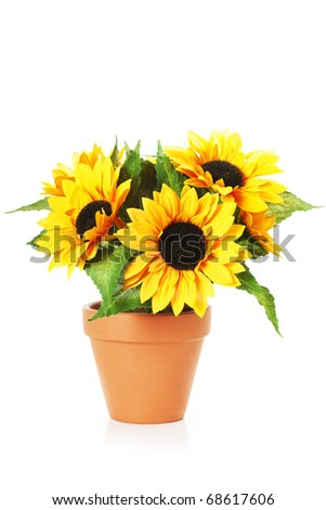 Image of bright sunflowers in a pot - stock photo