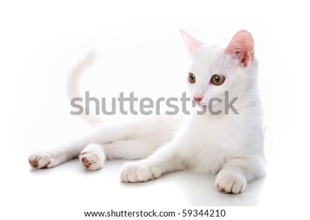 Image of calm white cat lying in studio over white background - stock photo