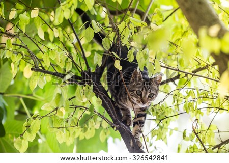 Image of cat playing on a tree with colourful background - stock photo