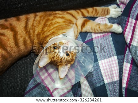 Image of cat wearing neck cone.  - stock photo
