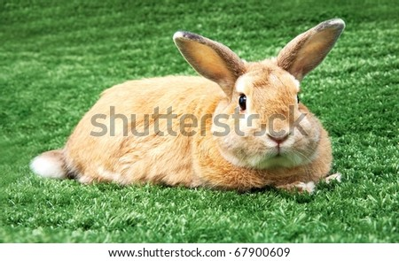 Image of cautious rabbit in green grass outdoor - stock photo
