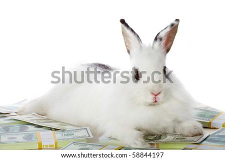 Image of cautious rabbit on heap of dollar bills in isolation - stock photo