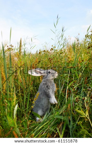 Image of cautious rabbit standing in green grass in summer - stock photo