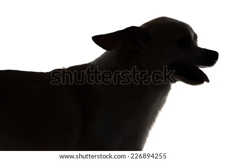 Image of chihuahua with open mouth - silhouette on white background - stock photo
