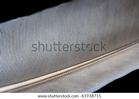 Image of close-up feather with abstract detail. - stock photo