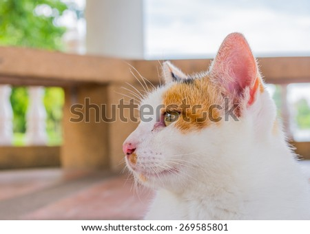 image of close up moody cat on day time . - stock photo