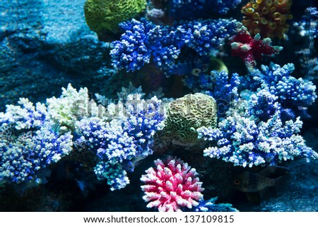Image of coral on the sea floor - stock photo