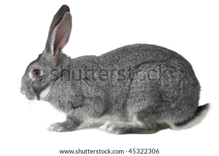 Image of cute grey rabbit isolated over white background - stock photo