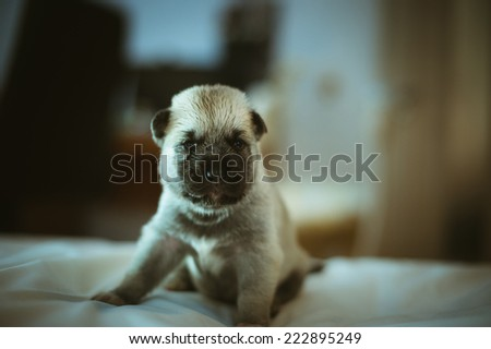 Image of cute little girl in pink suit and puppies on white background. Newborn baby, caucasian child. - stock photo