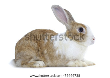 Image of cute rabbit - stock photo