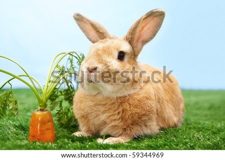 Image of cute rabbit on green grass with carrot near by