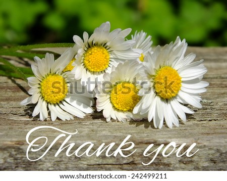 Image of daisies with lettering thank you - stock photo