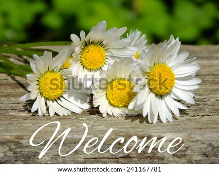 Image of daisies with lettering welcome - stock photo