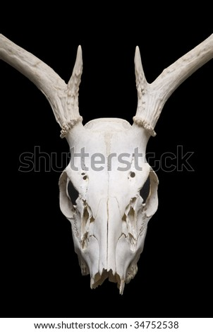 Image of deer skull on black background - stock photo