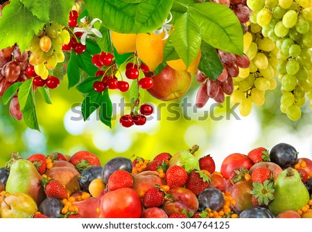 Image of different fruits in a garden - stock photo