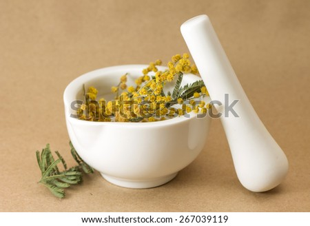 Image of dried mimosa in mortar, on brown background - stock photo