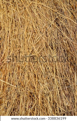 Image of Dried Yellow Hay Pattern Texture Background - stock photo