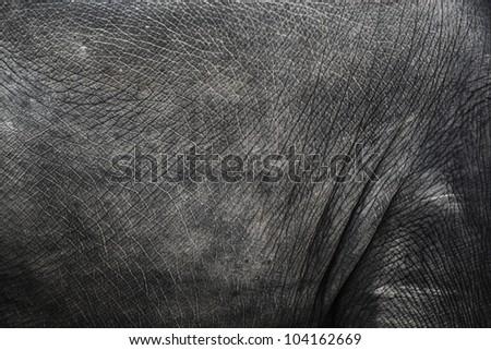Image of elephant skin - stock photo