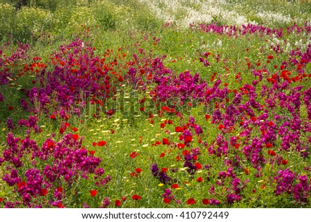 Image of field of colorful spring flowers in Schinias, Greece