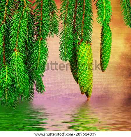 image of fir branch over the water - stock photo