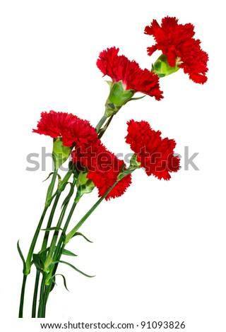 image of five colors carnation on a white background