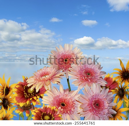 image of flowers on sky and water background - stock photo