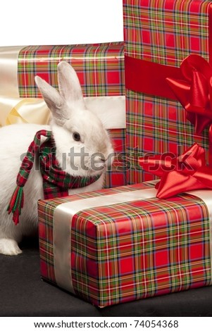 Image of fluffy rabbit rounded by gift boxes with red bows - stock photo