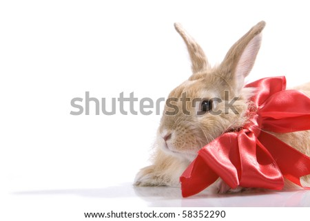 Image of fluffy rabbit with red bow in isolation - stock photo