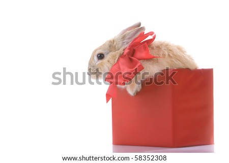 Image of fluffy rabbit with red bow in red giftbox - stock photo