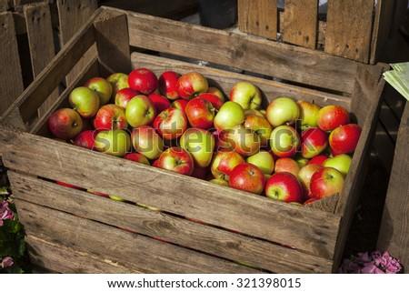 Image of freshly picked organic apples.  - stock photo