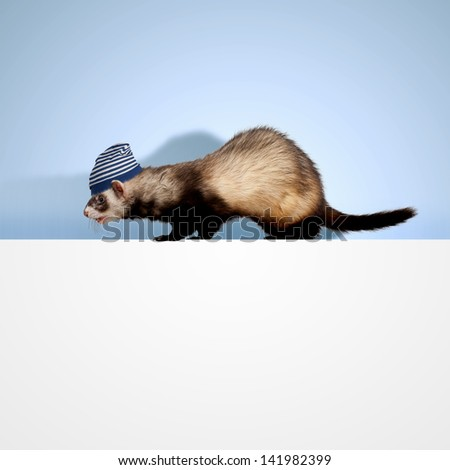 Image of funny polecat sitting on blank banner. Place for text