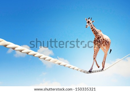 Image of giraffe walking on rope high in sky - stock photo