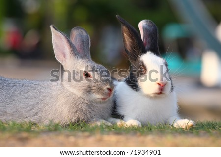 image of gray rabbit sitting with spotted white rabbit. - stock photo
