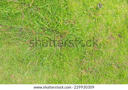 image of green grass background on day time. - stock photo