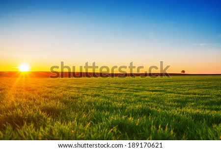 Image of green grass field and blue sky - stock photo