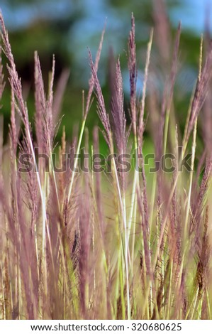 Image of green grass field and bright blue sky, Closeup of green grass - stock photo