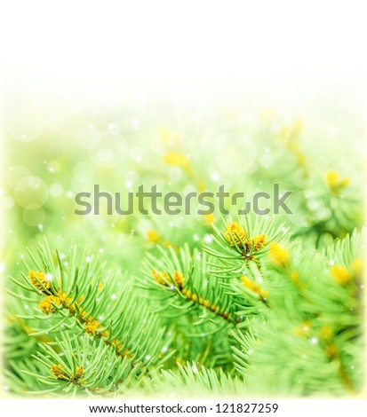 Image of green spruce border, fresh fir branch isolated on white background, copy space, Christmas holidays greeting postcard, traditional symbol of New Year celebrations, wintertime concept - stock photo