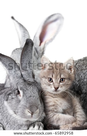 Image of grey rabbit with cute kitten near by - stock photo