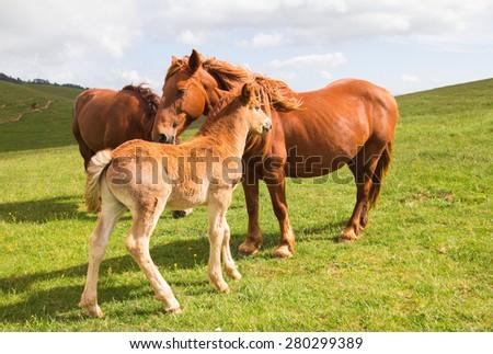 Image of happy family horses - stock photo