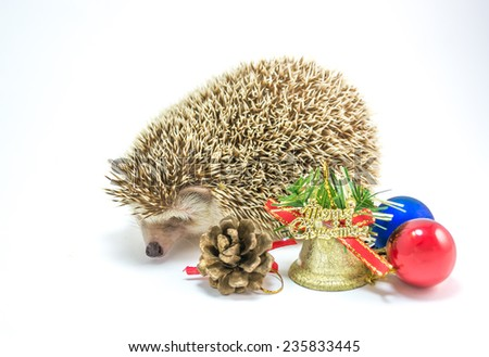 image of Hedgehog isolate on white background with christmas ornaments. - stock photo