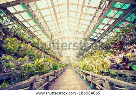 Image of interior of greenhouse with lots of plants - stock photo