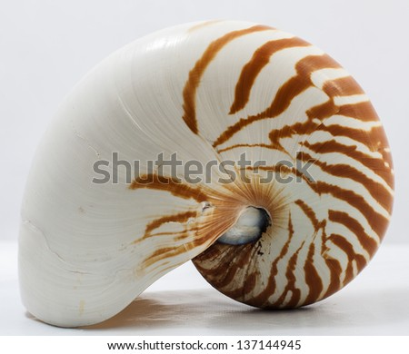 Image of isolated nautilus on white background