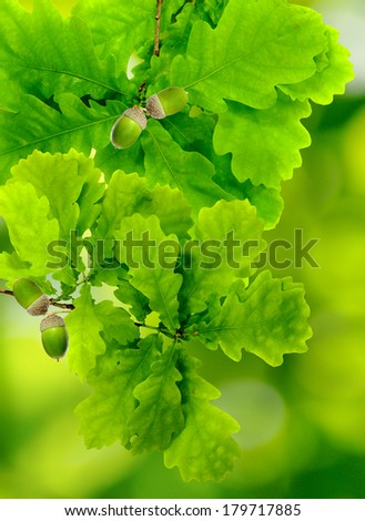 image of leaves on a green background - stock photo