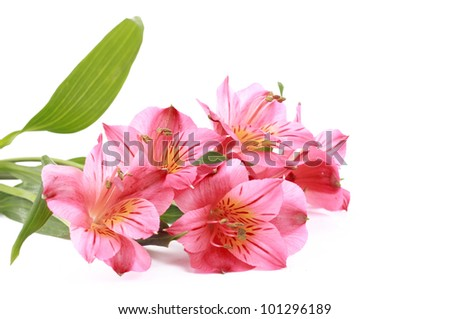 Image of light pink flowers over white background/Romantic flower design