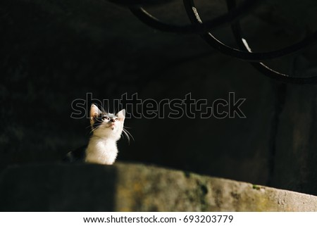 Image of lonely black and white kitten near dark  wall. Selective focus only on her eyes area and center of face.