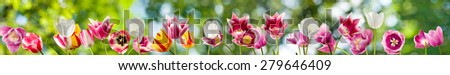 image of many flowers in the garden on a green background - stock photo