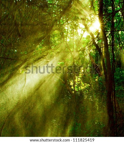 Image of misty rainforest and bright sun beams through trees branches, autumn dark woodland, shine morning sunray in fresh green forest, tropical woods, environment of jungle, wildlife concept - stock photo