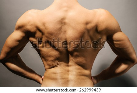 Image of muscular bodybuilder's back. - stock photo