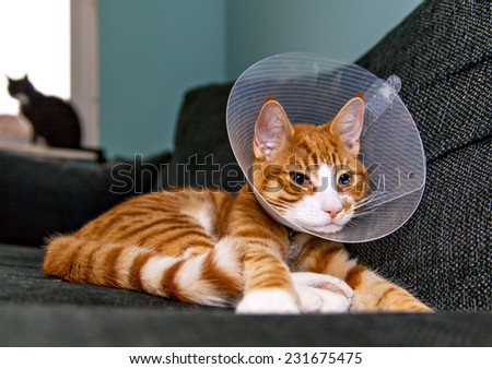 Image of orange cat with veterinairy cone on its head, after surgery.  - stock photo