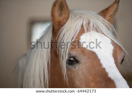 image of part of face of domestic horse on farm